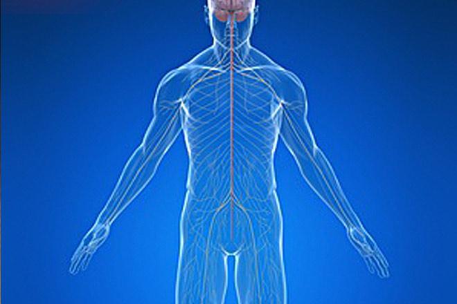 Información sobre lesiones nerviosas