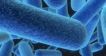 candidiasis enfermedad infecciosa