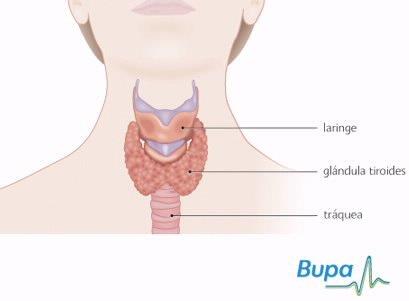 Imagen prevencionSalud tiroides1