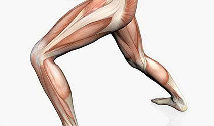 elongación muscular