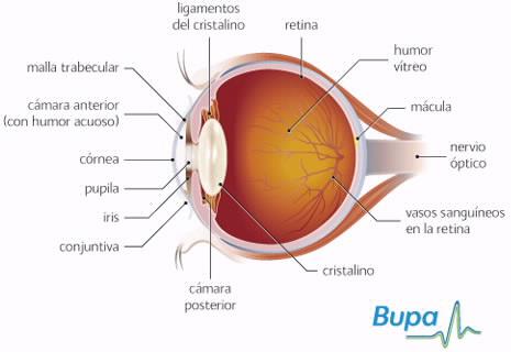 Como quitar el hinchazón de la picadura de la mosquita del ojo