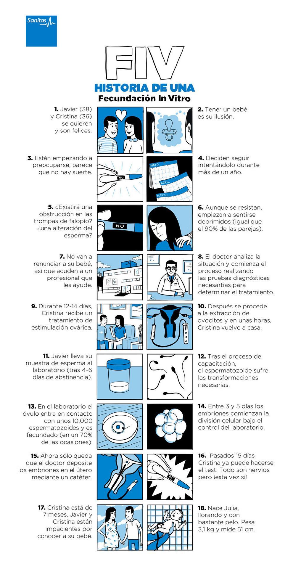 Infografía Fecundación In Vitro